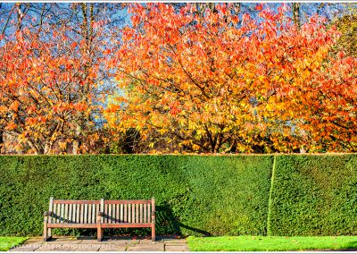 Bench Regent's Park, Photograph by Adam Butler