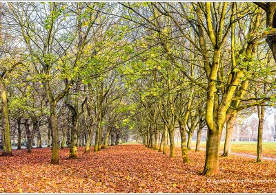 Avenue of Trees, Autumn