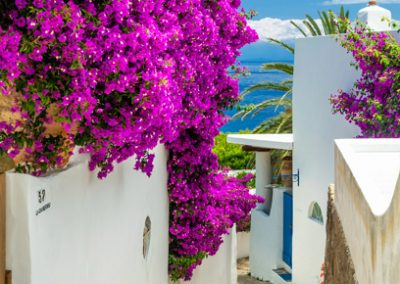 Alleyway with Bougainvilleas, Drauto